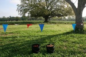 Strawberry Picking TX 3