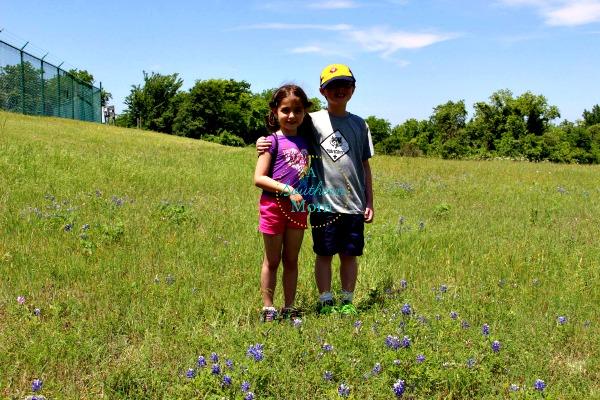 bluebonnets texas